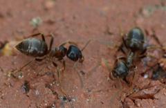 Ameisenprobleme zuverlässig lösen - Schädlingsbekämpfung JARKOW