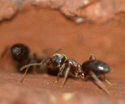 Schädlingsbekämpfung: Ameisen professionell bekämpfen
