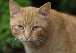 Katzen in der biologischen Schädlingsbekämpfung