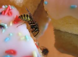 Wespen professionell bekämpfen - Schädlingsbekämpfung JARKOW aus Hessen
